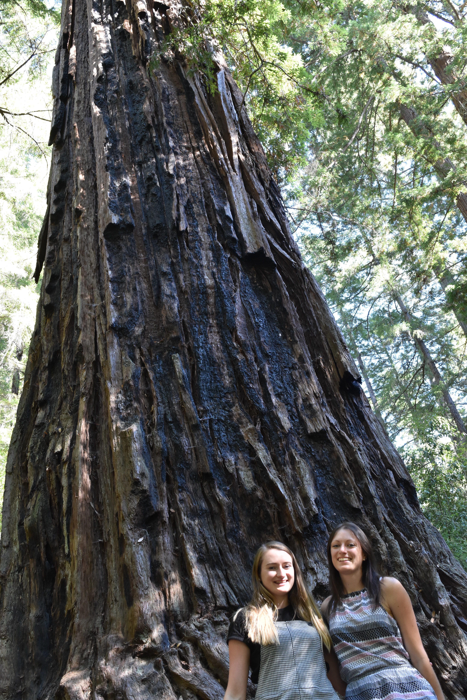 Redwood Big Basin