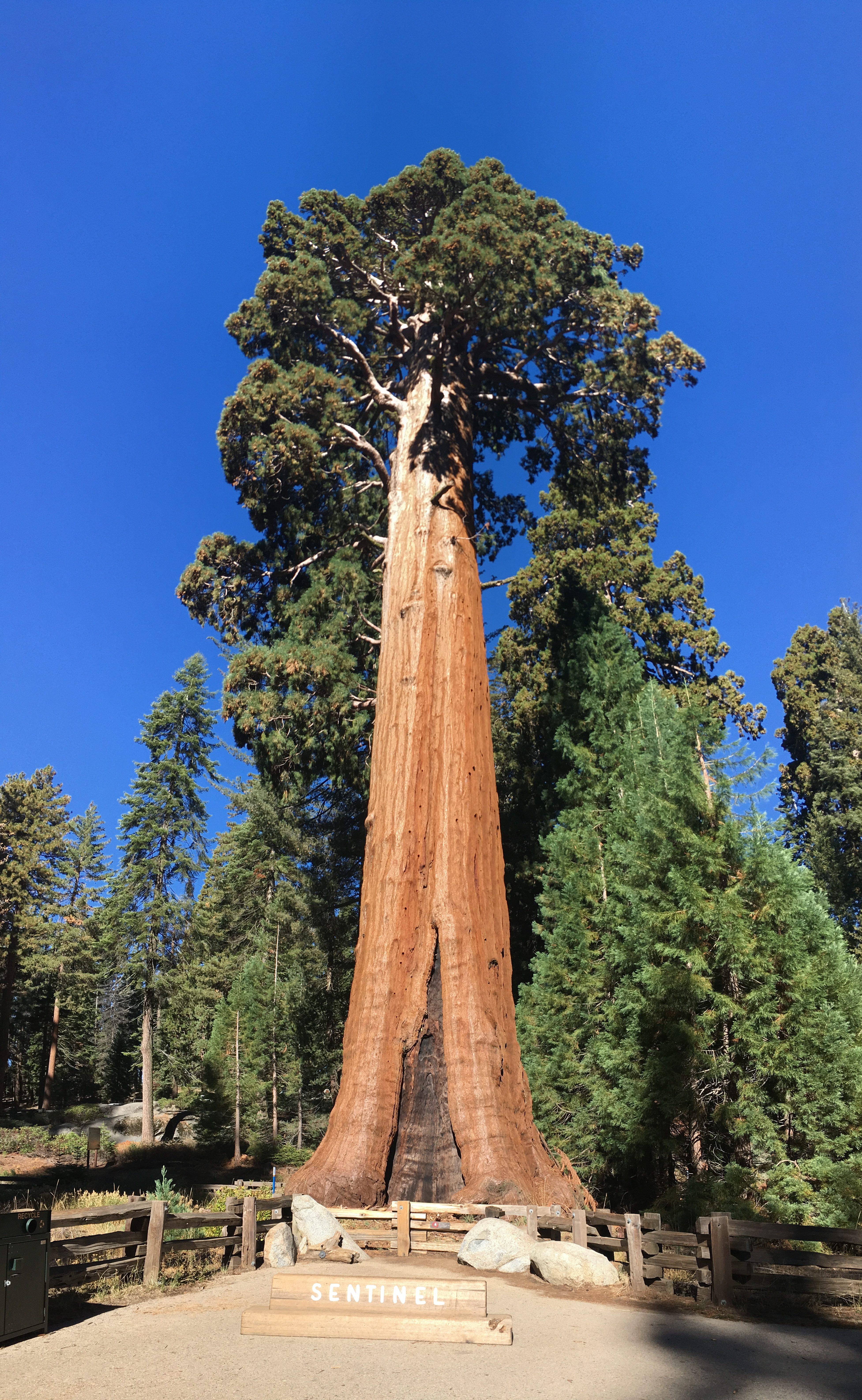 Redwood volle Größe