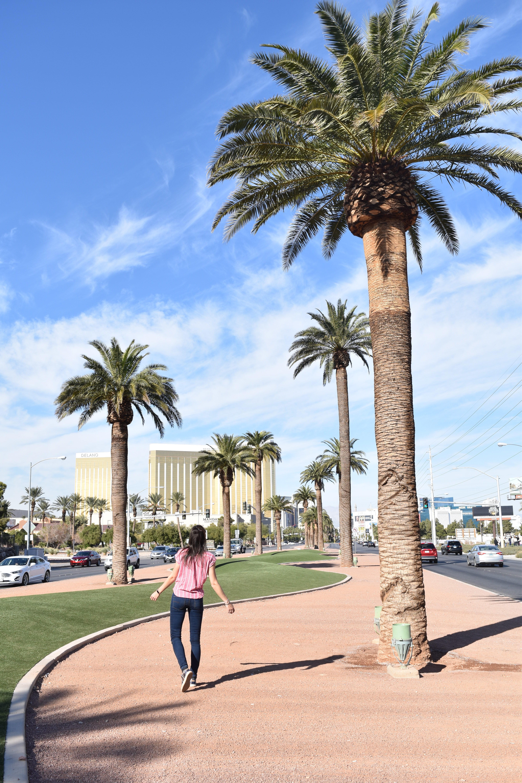 Palmen Vegas