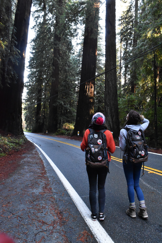 Redwood Walking