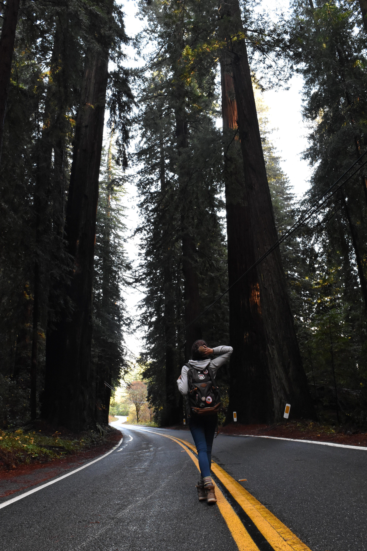 Redwood State Park Sasy