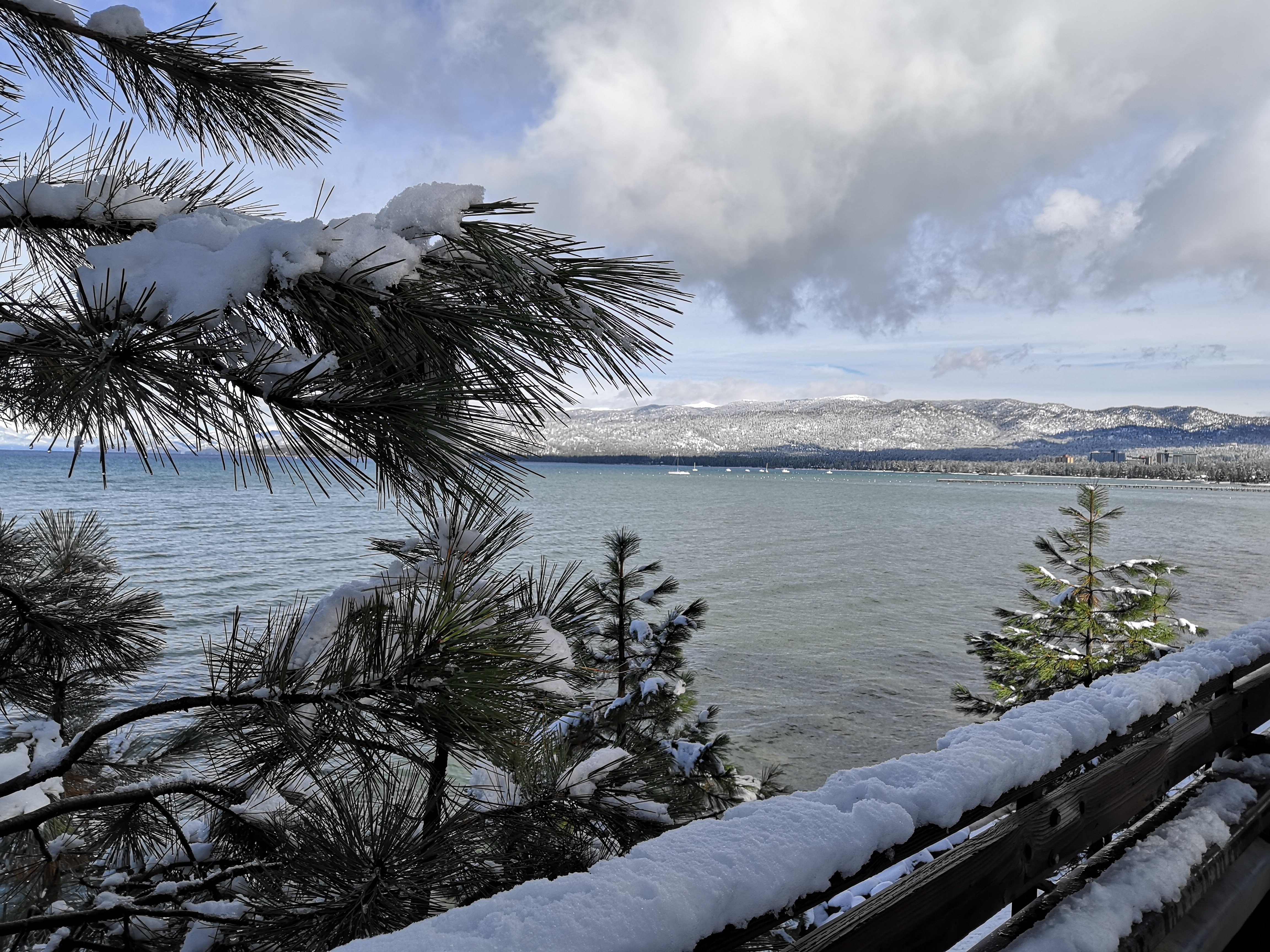 Verschneite Bäume Lake Tahoe