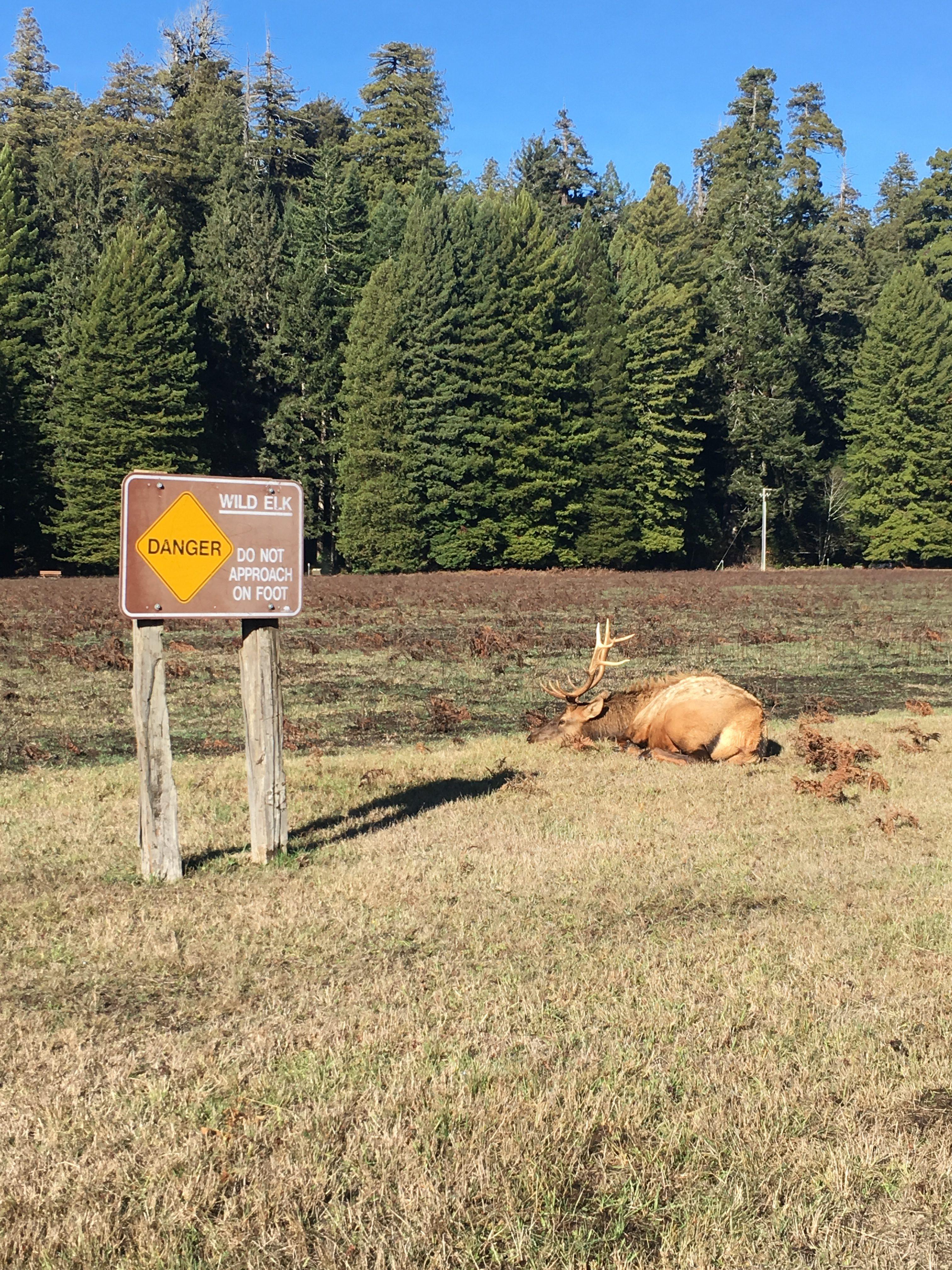 Danger - Elk - Dont Touch